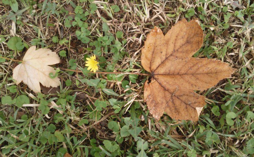 Yanopoulos, Yorgos – Eşikteki Çiçekler